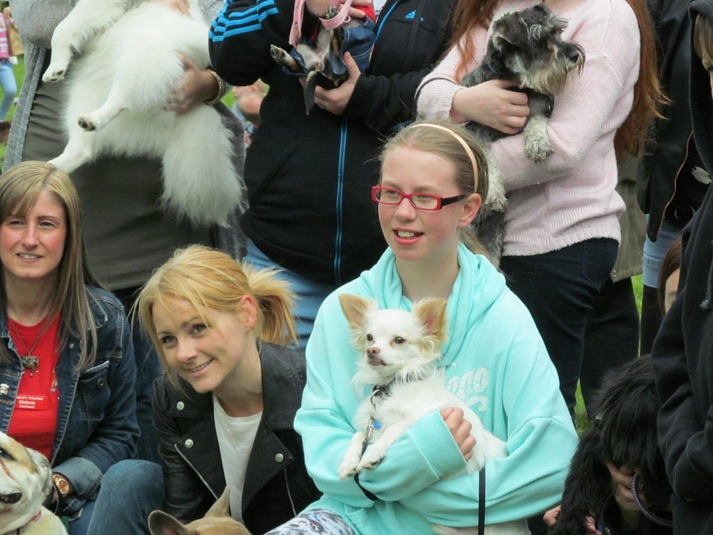 Scarlett at her 2015 Barking Berry's Fun Dog Show