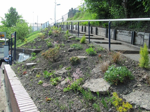 Westhoughton Station - clean-up and planting work 2013 - Friends of Westhoughton Station